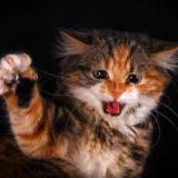справиться со злостью